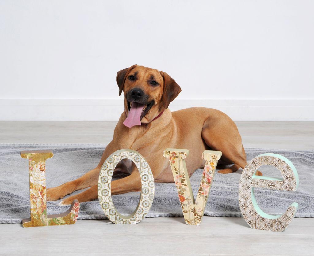 Pet Photography 3